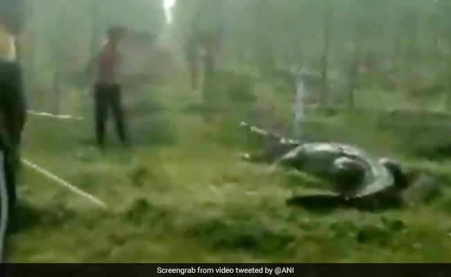 12-Foot Crocodile Rescued In Vadodara. Watch Terrifying Video