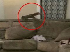 Watch: Utter Chaos As Squirrel Comes Down Chimney, Leads Family On Chase