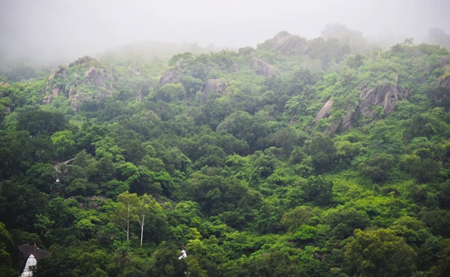 India's Forest Cover Expanded By Over 5,000 Square Km In 2 Years: Report