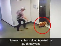 Viral Video: Man Rushes To Save Dog After Leash Gets Stuck In Elevator
