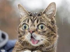 कूडे़ के ढेर से 7 लाख डॉलर कमाने तक का सफर, देखें सबसे पॉपुलर बिल्ली Lil Bub की Photos