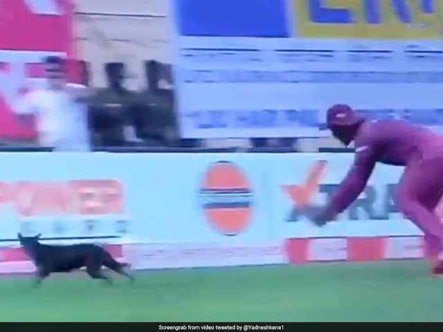 India vs West Indies: 1st ODI Paused After Stray Dog Invades Ground. Watch