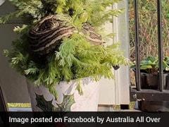 Christmas का पेड़ सजाने जा रही थी महिला, जैसे ही छुआ तो अंदर से निकला 10 फूट का अजगर और फिर...