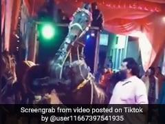 TikTok Top 5: शादी में घोड़े ने दो टांग पर खड़े होकर किया जबरदस्त डांस, देखें Video