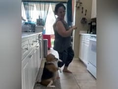 कुत्ते ने रसोई में दिखाया मजेदार डांस, Viral Video को देख लोगों ने कहा- ''यह कितना प्यारा है''