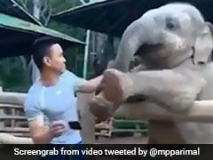 Playful Baby Elephant Demands Keeper's Attention In Delightful Video