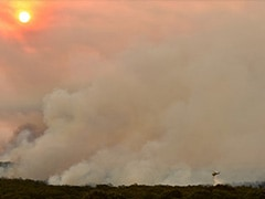 Three US Crew Helping Battle Australia Bushfires Killed In Plane Crash