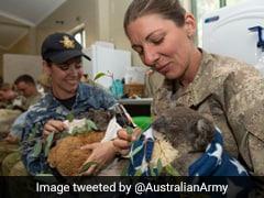 Australian Soldiers Feed Rescued Koalas, Wrap Them In Blankets