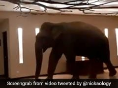 Curious Elephant Walks Into Hotel, Knocks Over Lamp In Viral Video