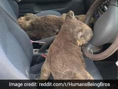 Australia Bushfire: कोआला को बचाने के लिए कार लेकर कंगारू आइलैंड पहुंचे बच्चे, देखें ये Viral Video