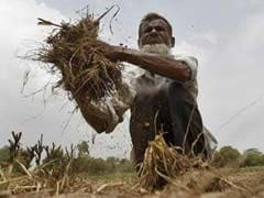 Agriculture Set To Cushion Impact Of Covid-19 On Economy In 2020-21: Government
