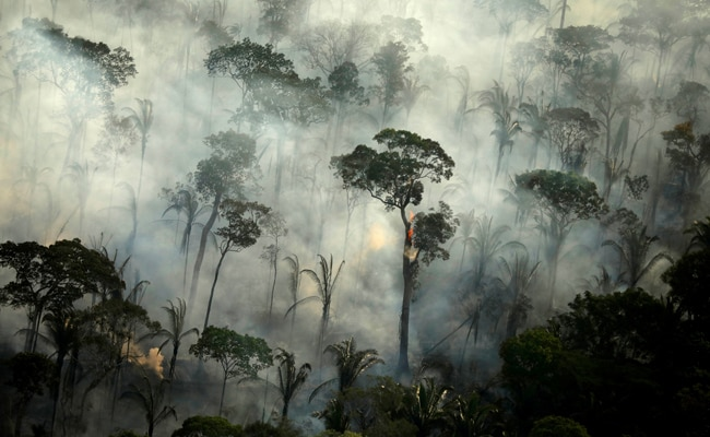 Amazon Forest Fires Increased By 30% In 2019: Report
