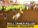 Video : Man Gored To Death At Bull-Taming Sport Jallikattu In Tamil Nadu