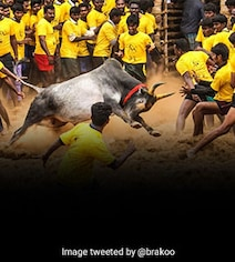 விறுவிறுப்பாக நடைபெற்று வரும் அலங்காநல்லூர் ஜல்லிக்கட்டு!! சீறிப்பாயும் காளைகள்!