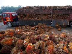 January Palm Oil Imports From Malaysia Could Hit Nine-Year Low