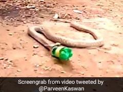Viral Video: আস্ত প্লাস্টিকের বোতল গিলে ফেলল কেউটে সাপ! তারপর?