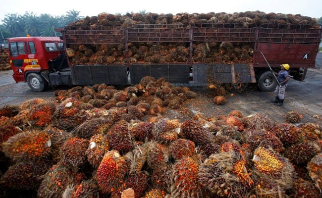 March Palm Oil Imports Up 57% Year On Year