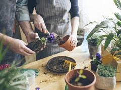 NDMC's School Of Gardening To Offer Certificate Courses For Public