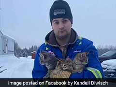 Man Finds 3 Kittens Frozen To Ground, Uses Coffee To Rescue Them. Watch