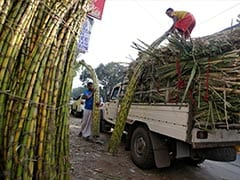 Indian Traders Sign Sugar Export Deals In Advance As Frost Hits Brazil