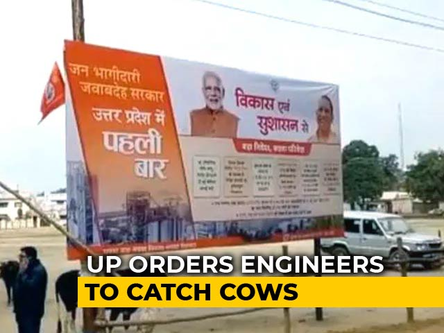 Video : For Yogi Adityanath Visit, UP Orders Engineers To Catch Cows, Retracts