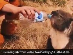 Australia Bushfire: फायरमैन ने जान बचाने के बाद प्यासे कोआला और कंगारू को इस तरह पिलाया पानी, देखें Video