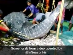 जाल में फंसी दुर्लभ मछली, मछुआरों ने उसे वापस छोड़ दिया पानी में, Viral Video देख लोगों ने कहा...