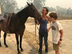 Austrailia Bushfire: धुएं में फंस गई थी मालकिन, घोड़े ने ऐसे बचाई उसकी जान