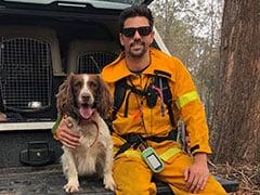 Search Dog Taylor A Bushfire-Hit Koala's Best Friend