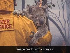 Australia Bushfires: மனதை நொறுக்கும் புகைப்படங்கள்