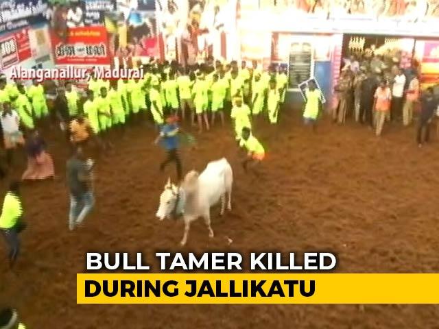 Video : Man Gored To Death At Bull-Taming Sport Jallikattu In Tamil Nadu