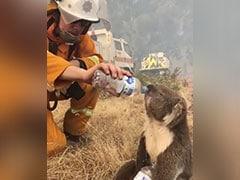 """Australia Could List Koalas As """"Endangered"""" Amid Bushfire Crisis"""