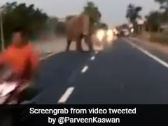 Watch Video: Biker Breaks Barricade, Nearly Collides With Elephant. Internet Angry