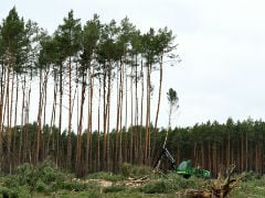 Tesla Resumes To Cut Trees In Germany To Build Gigafactory