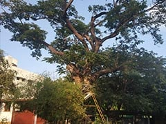 Chennai School Spends 5 Lakh To Save 80-Year-Old Tree, Home To Parrots