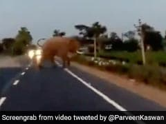 Video: Biker Almost Gets Hit By Elephant While Crossing Blocked Road