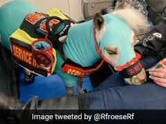 Mini Service Horse Flies First Class, Sparks Fierce Debate Online