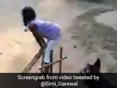 क्रिकेट मैच में विकेटकीपर बना डॉगी, बिजली की रफ्तार से गेंद पर यूं लपका, एक्ट्रेस ने शेयर किया Video