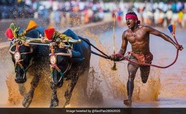 Another Kambala runner breaks Srinivas Gowda;s record