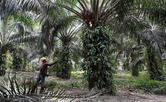 India Palm Oil Import Curbs 'Temporary': Malaysia Amid CAA Criticism Row