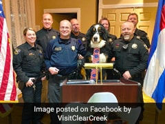 Dog Named Mayor Of US Town. His 'Pawlicies' Include Hugs, Cookies For All