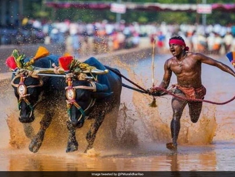Karnataka Man Who Ran Sub-10 Second Buffalo Race Called For Sports Trials