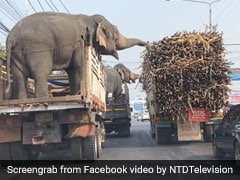 Viral Video: Elephants Enjoy A 'Meal On Wheels' While Waiting At A Red Light