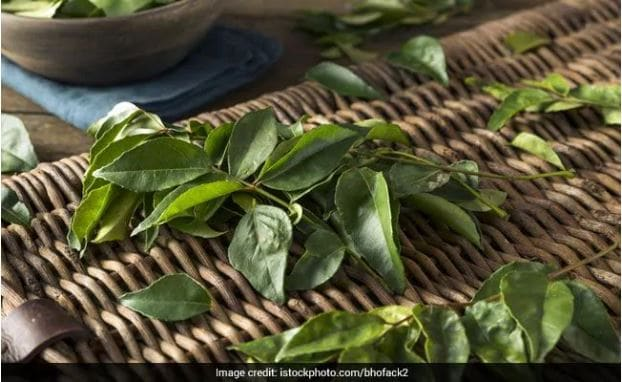 Indian Kitchen Tips: Follow These Steps To Store Curry Leaves At Home For Months