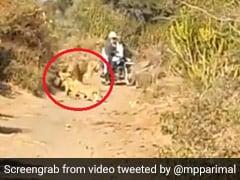 शेरनी अपने बच्चों के साथ घूम रही थी सड़क पर, जैसे ही बाइक लेकर आया किसान तो हुआ ऐसा... देखें Video
