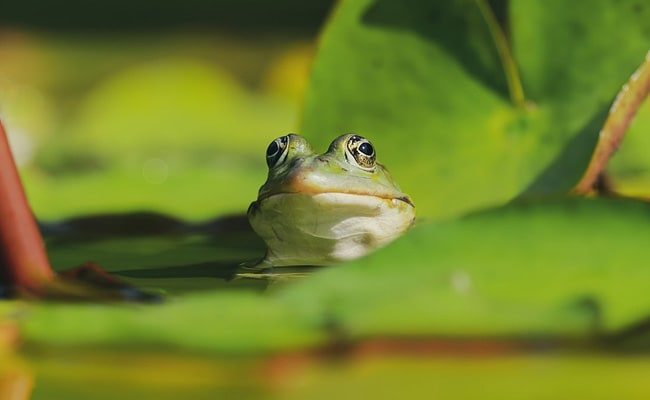 Couple Find Live Frog Inside Bell Pepper, Internet Amazed
