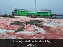 Spooky 'Blood Snow' Spotted In Antarctica. See Viral Pics