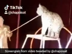 On Camera: Circus Lynx Attacks Trainer In Front Of Horrified Audience