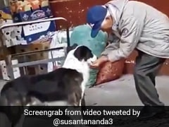 Elderly Man Helps A Dog Drink Water In The Most Wholesome Video Ever