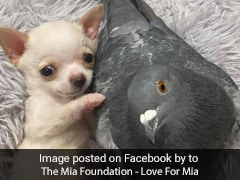 Viral: The Internet Can't Get Enough Of This Puppy And Pigeon Friendship